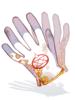 Перчатка Алхимии